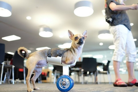 3D-Printed Pawsthetics Project | Managing Technology and Talent for Learning & Innovation | Scoop.it