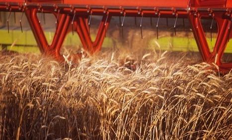 Les céréaliers dans une situation inquiétante | Agriculture en Dordogne | Scoop.it