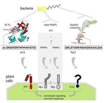 Zentrum für Molekularbiologie der Pflanzen-felix   learning plant   Scoop.it