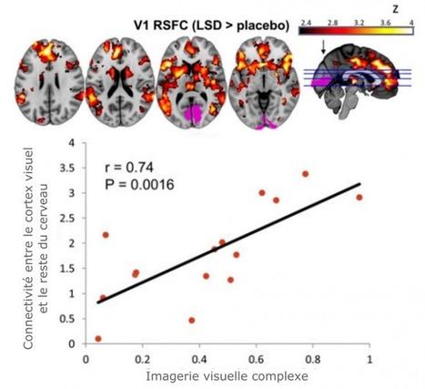 La neuroimagerie du LSD: une première mondiale aux frontières de la science   Neurosciences   Scoop.it