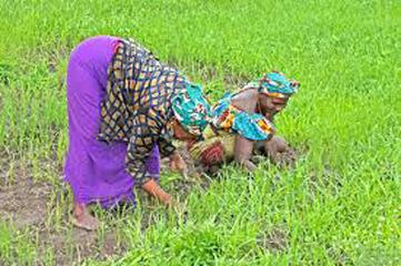 Développement rural : Le Nepad prône une meilleure implication des femmes dans l'agriculture | Questions de développement ... | Scoop.it