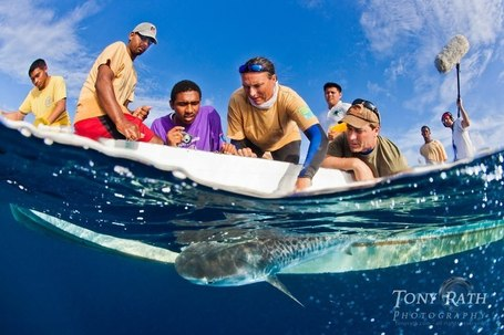 The Belize Shark Project | Belize in Social Media | Scoop.it