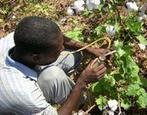 Quelles voies choisir pour une intensification durable de l'agriculture en Afrique ? - CIRAD | Nourrir la planète... autrement | Scoop.it