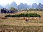 Agroécologie : la France et la Chine explorent les voies de coopération | Questions de développement ... | Scoop.it