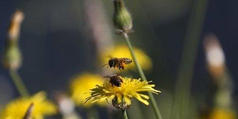 Biodiversité : la Caisse des dépôts appelle les entreprises à investir - La Tribune | Le Fil @gricole | Scoop.it