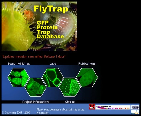 Flytrap - the GFP Protein Trap Database | bioinformatics-databases | Scoop.it