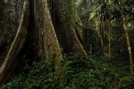 Building a Sustainable Forest Economy | Rainforest EXPLORER:  News & Notes | Scoop.it