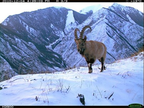 Untouched Nature in Trail Cam Photos | English Russia | Transformational Adventures | Scoop.it