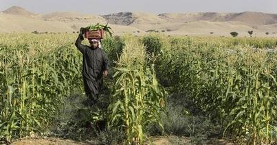 Saudi kingdom investment in agriculture rises 6.6% annually - Zawya (registration) | Agricultural & Horticultural Industry News | Scoop.it