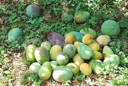 Fruits, veggies lower risk of bladder cancer... - New Vision | Health | Scoop.it