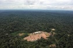 La forêt amazonienne du Pérou en état d'urgence environnementale | Toxique, soyons vigilant ! | Scoop.it