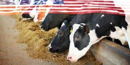 États-Unis : des vaches nourries aux bonbons – bientôt dans votre assiette - Esprits Science Métaphysiques   philippe BERGES   Scoop.it