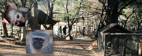 One Woman Who Makes a Difference for Primates in S. Africa | Saving All Animals | Scoop.it