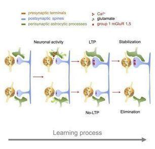 Apprendre, comprendre et mémoriser | cognitif | Scoop.it