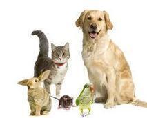 Pet Health Care Plan | Petcare Insurance | Scoop.it
