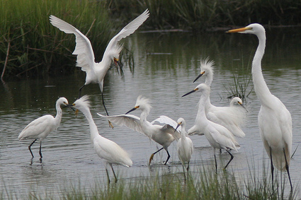 Our country's wetlands and streams at risk! | The Bog | Scoop.it