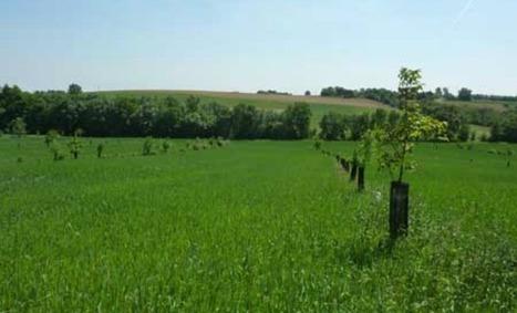 L'agroforesterie, une nouvelle voie pour une agriculture plus durable | Filière bois : Filière d'avenir | Scoop.it