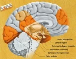Internet et cerveau humain : quels impacts ? | Internet, cerveau et comportements | Scoop.it