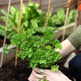 Garden Based Education | Urban Farming | Scoop.it