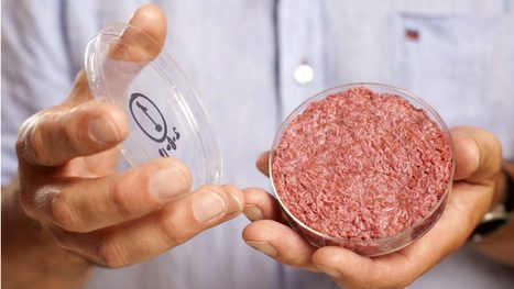 As lab-grown meat and milk inch closer to U.S. market, industry wonders who will regulate? | MishMash | Scoop.it
