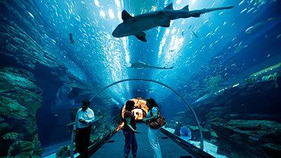 Dubai Exclusive Tour, United Arab Emirates Tours, Tour Packages,United Arab Emirates Vacation Deals | T2everywhere | Scoop.it
