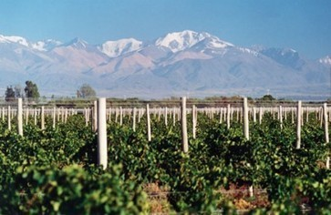 Political instability affecting French winemakers in Argentina | decanter.com | Grande Passione | Scoop.it