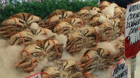 Acidifying Waters Put Dungeness Crabs at Risk | Changing Chemistry - The People Impacted by Ocean Acidification | Scoop.it