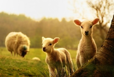 New Zealand Officially Recognizes Animals As 'Sentient Beings' | GarryRogers Biosphere News | Scoop.it