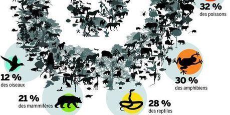 Biodiversité : cinquante ans pour achever l'inventaire des espèces | CAP21 | Scoop.it