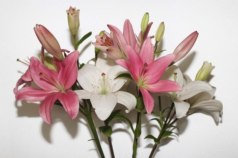 Cheap Birthday Flowers Delivery   Fresh Flowers in Australia   Scoop.it