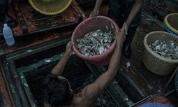 Revealed: how the Thai fishing industry traffics, imprisons and enslaves | All about water, the oceans, environmental issues | Scoop.it