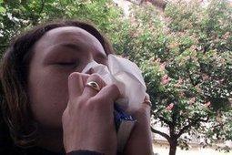 Les allergies au pollen sont en avance   Toxique, soyons vigilant !   Scoop.it