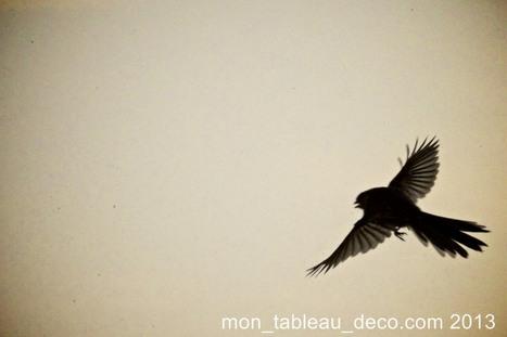 Vincenzo - mon-tableau-deco.com | Photographie | Scoop.it