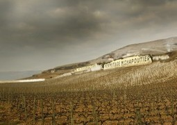 The Success of Chapoutier: History and Terroir | Vitabella Wine Daily Gossip | Scoop.it