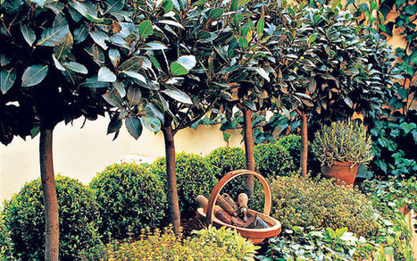 How to garden into old age - Telegraph   Container Gardening   Scoop.it