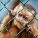 Stop Vivisection: raggiunte 1 milione di firme per dire NO alla vivisezione ... - Eticamente.net | STOP VIVISECTION | Scoop.it