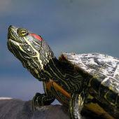 Dédiaboliser les espèces invasives sans minimiser les impacts et les enjeux | Ca m'interpelle... | Scoop.it