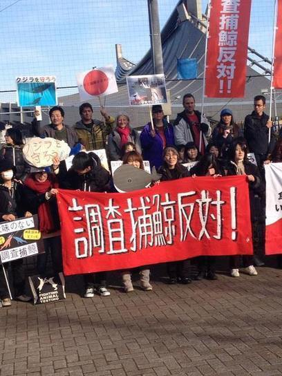 Action for Marine Mammals 海洋ほ乳類を守る会 Hold Tokyo March Protesting Research Whaling | Dolphins | Scoop.it