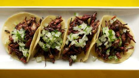 Philly makes room at the table: Edible insects and grasshopper tacos — NewsWorks | Entomophagy: Edible Insects and the Future of Food | Scoop.it