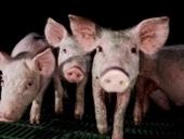Libros y recursos gratuitos de zootecnia y veterinaria | Educación a Distancia | Scoop.it