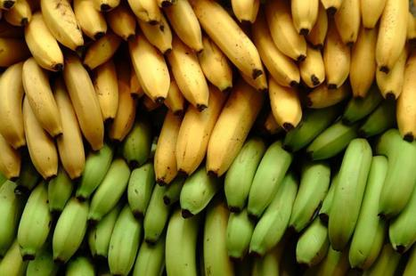 Has The End Of The Banana Arrived? | Plant Biology Teaching Resources (Higher Education) | Scoop.it