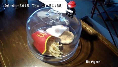 6 ans après, le dernier cheeseburger McDonald's d'Islande pourrit encore | Communiqu'Ethique sur la santé et celle de la planette | Scoop.it