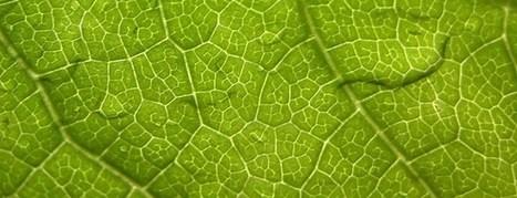 Una hoja artificial convierte la energía solar en combustible líquido   Infraestructura Sostenible   Scoop.it
