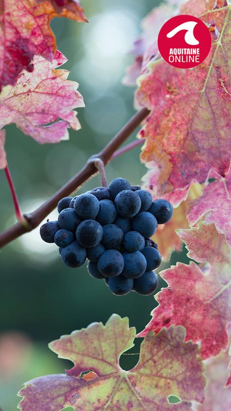 Côtes de Bordeaux :  le développement de vins de marques   Communication, Marketing Web&Vin   Scoop.it