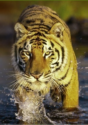 Jim Corbett National Park – The Adventurous National Park | Wildlife of India | Scoop.it