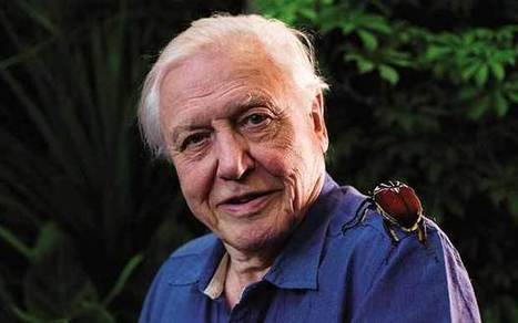 Sir David Attenborough: The world wouldn't change hugely if the panda was extinct - Telegraph | Wildlife and Environmental Conservation | Scoop.it