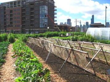 2013/02/01> BE Allemagne599> L'agriculture urbaine : entre expansion des villes et maintien des surfaces agricoles   Agriculture urbaine et rooftop   Scoop.it