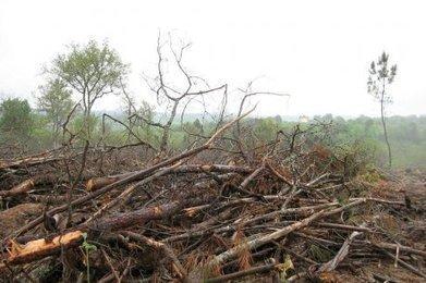 Des forêts à rénover   Agriculture en Dordogne   Scoop.it