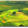 Hoi An ancient Town in Viet Nam