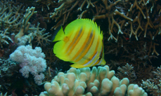 Fish and corals need each other | Science Tools for School | Scoop.it